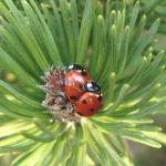 ParisNord2_Biodiversite